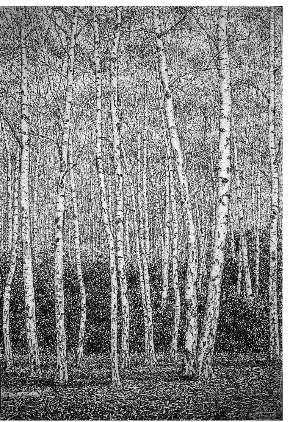 Roy Wright - 'Silver Birch Forest Autumn 2'
