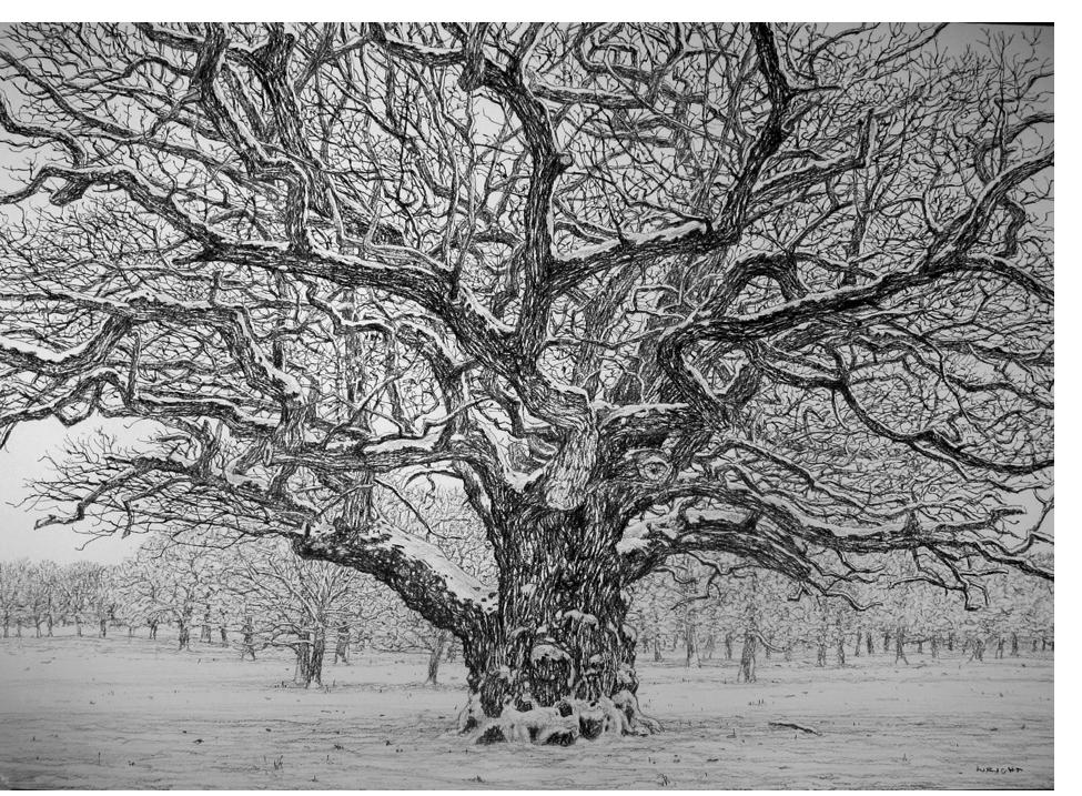 Roy Wright - 'Snow on the Oak'
