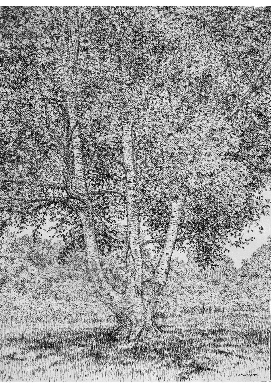 Roy Wright - 'Summer Silver Birch Tree'