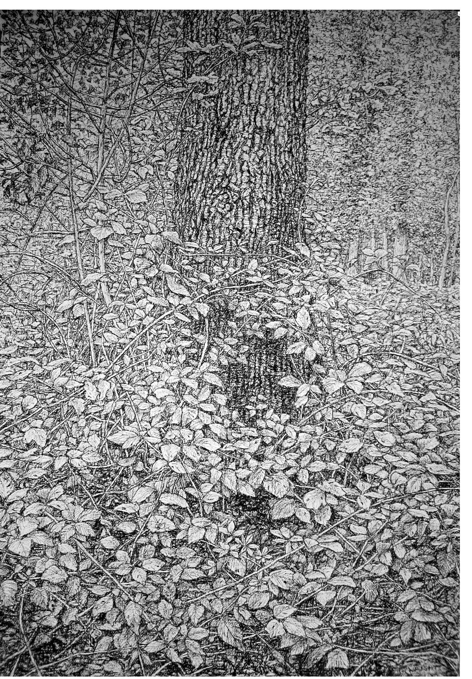 Roy Wright - 'Unfathomable Deep Forest'